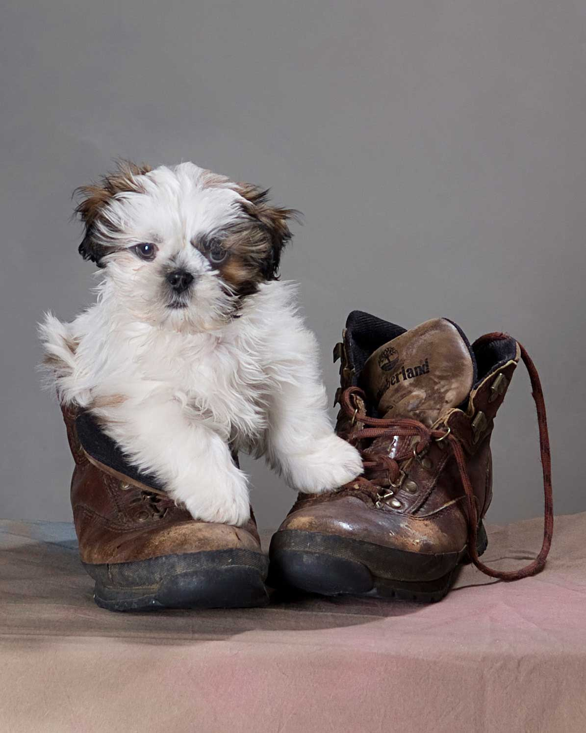 dog in boot photo